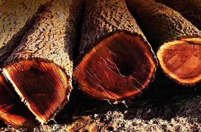 South West Hardwood Logs ~ Grimes hardwoods